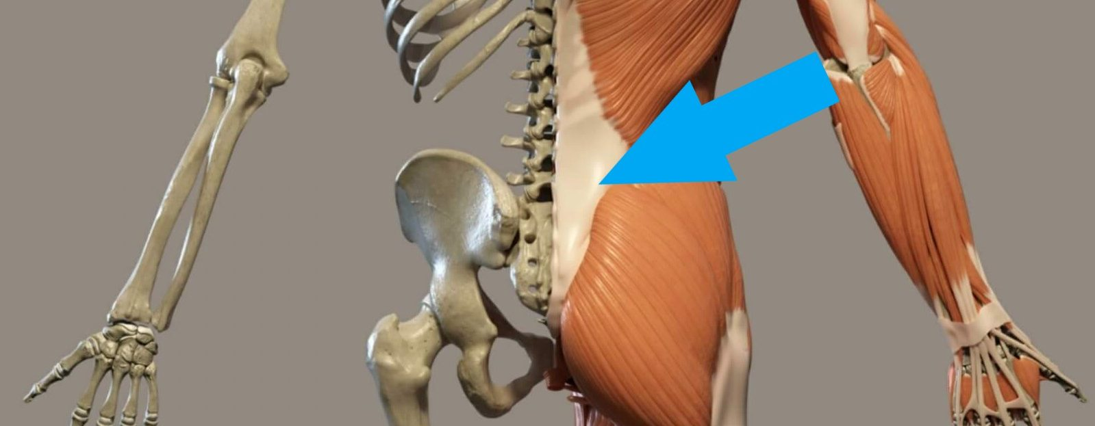 Posterior lumbar and pelvic skeletal and surface muscle anatomy with SI joint pain
