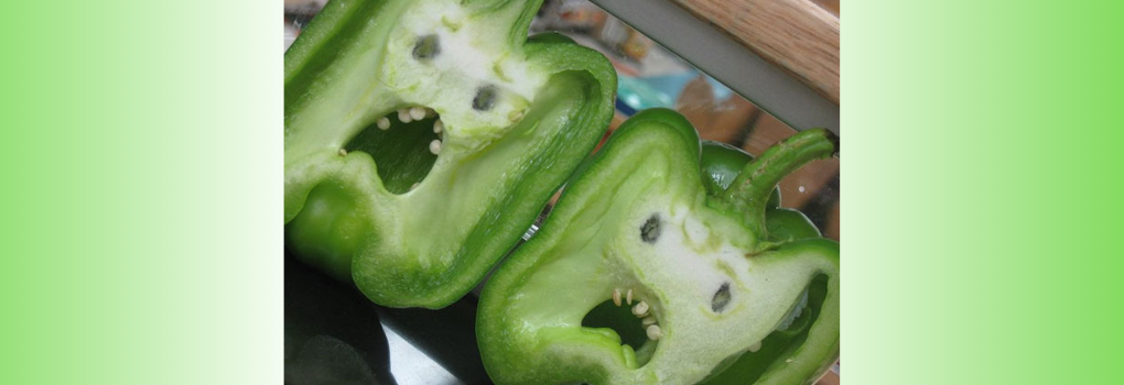 Green capsicum bell peppers that look like they are screaming